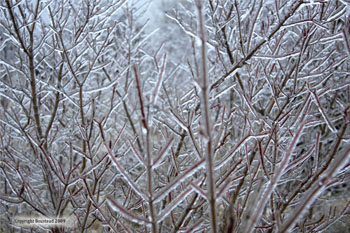 freezing rain glaze on trees
